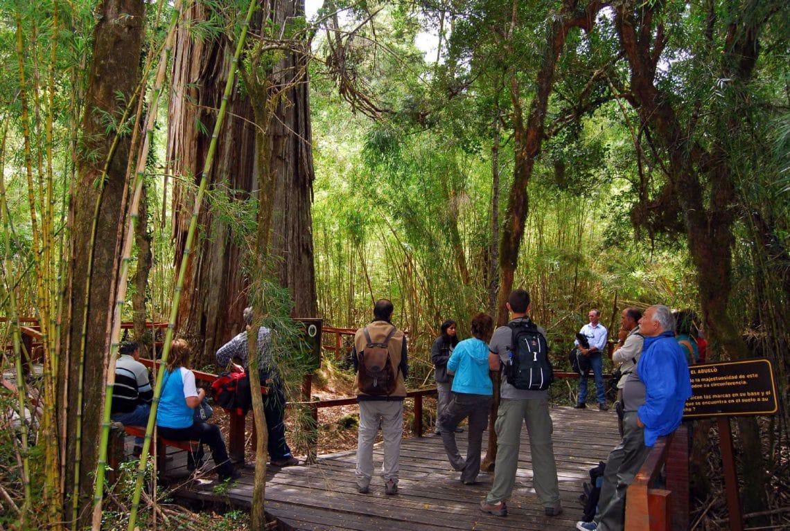 Alerzal milenario - Parque Nacional Los Alerces - Chubut - foto: Diario Los Andes