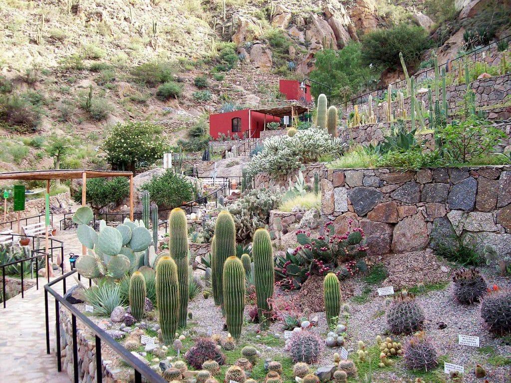 Jardín Botánico Chirau Mita, Chilecito