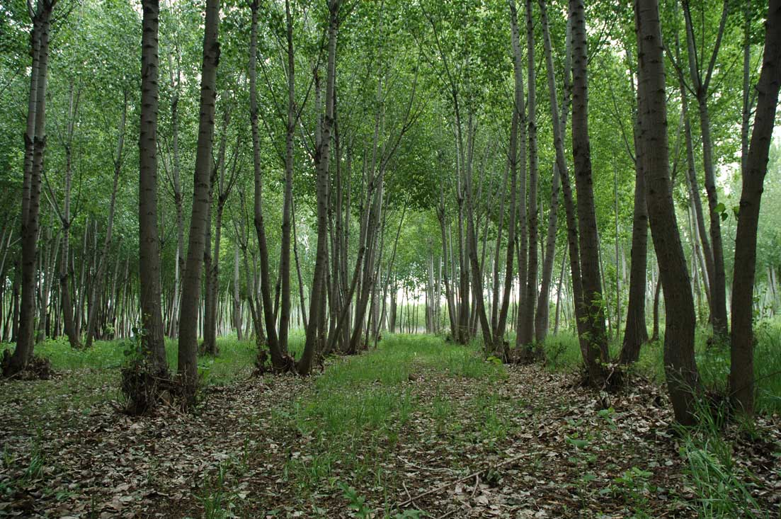 Cipolletti Río Negro