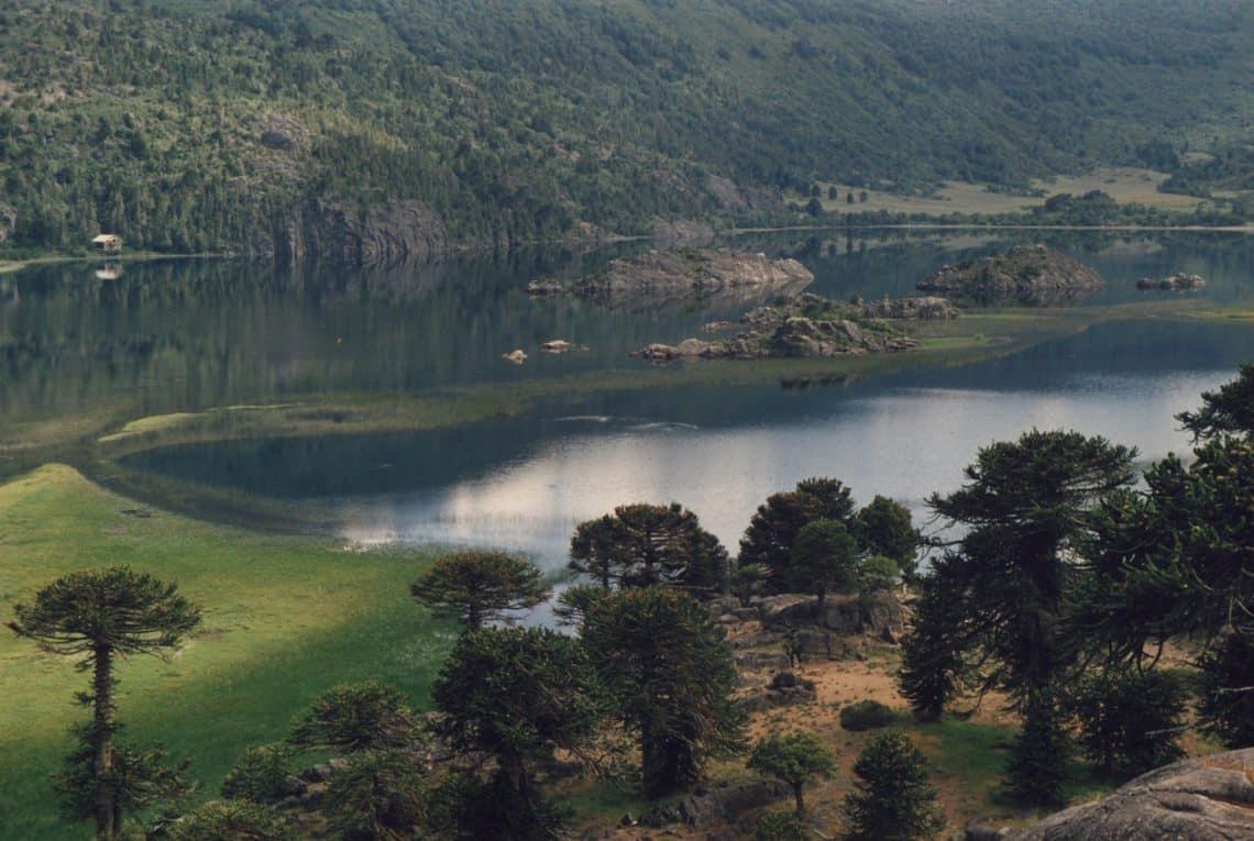 Araucaria sobre el lago Pulmari