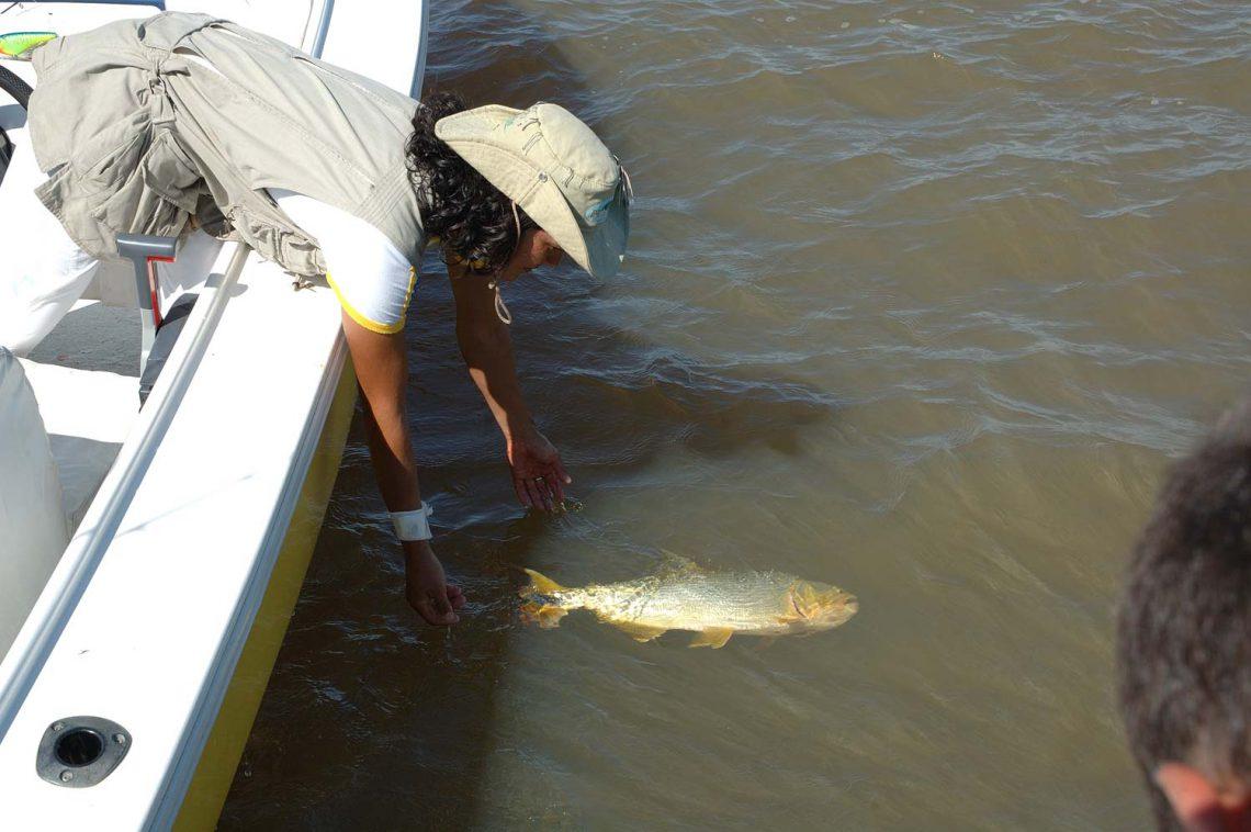 Pesca deportiva en Isla del Cerrito, Chaco
