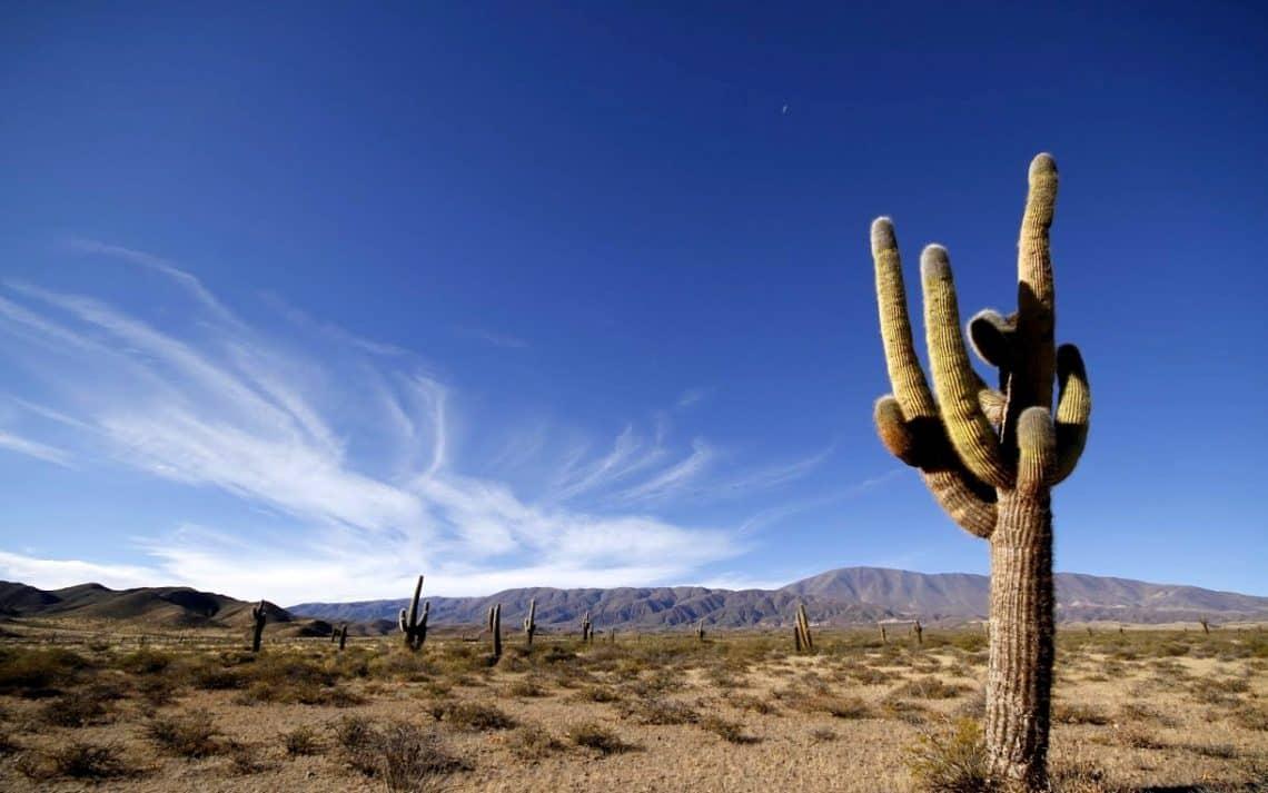 Parque Nacional Los Cardones, Salta - @Ricardo Perez - www.parquesnacionales.gob.ar
