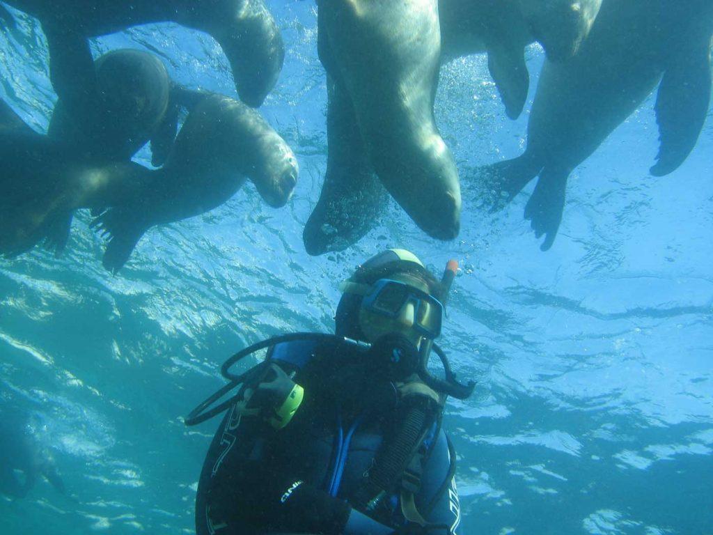 Nadar con lobos marinos en Puerto Madryn - snorkel - buceo - foto: Melina Perez