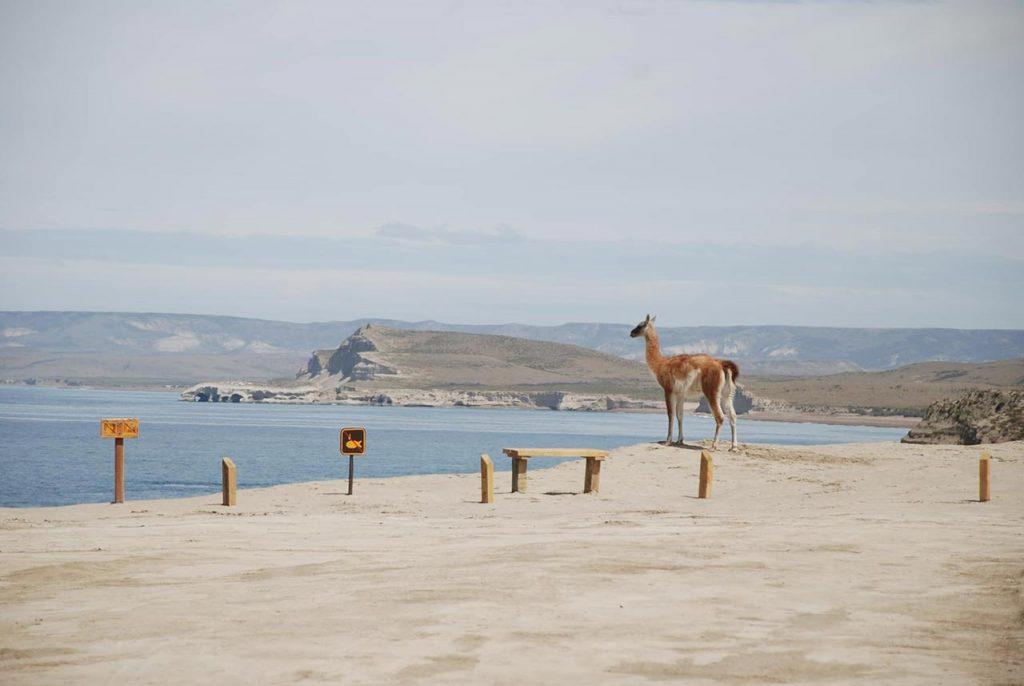 Parque Nacional Monte León, Santa Cruz, Patagonia