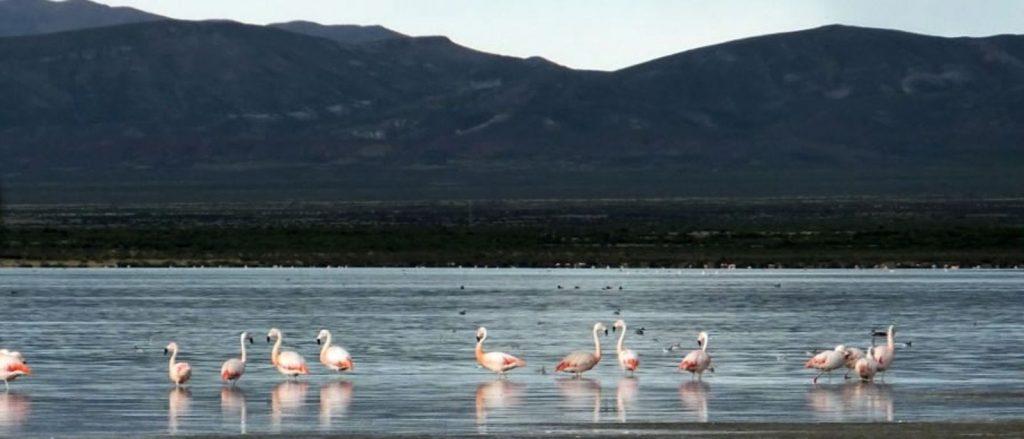 Monumento Natural Laguna de Los Pozuelos, Jujuy - argentina.travel