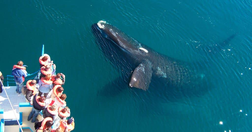 Avistaje de ballenas embarcado foto:Angel Velez