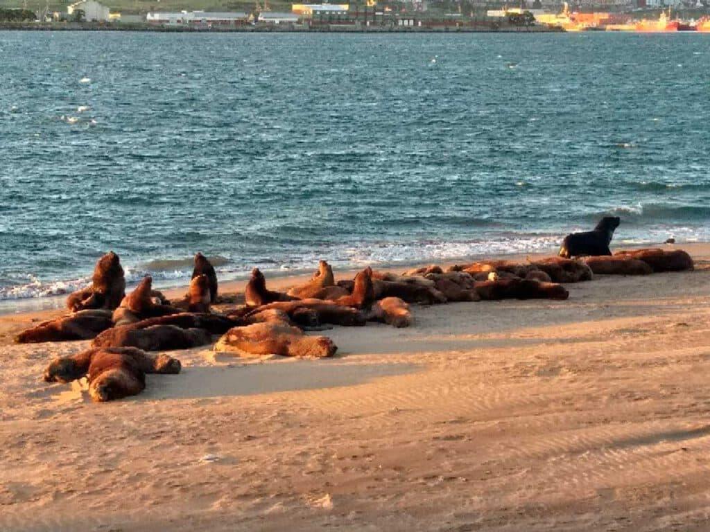 Reserva de lobos marinos en la Escollera Sur del Puerto de Mar del Plata