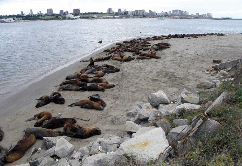 Reserva de lobos marinos del puerto de Mar del Plata