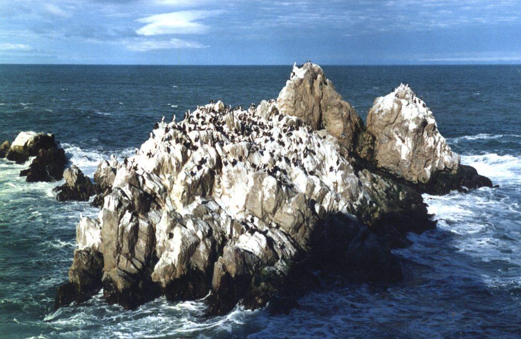 Cormoranera de la Reserva Natural de Cabo Blanco, Santa Cruz