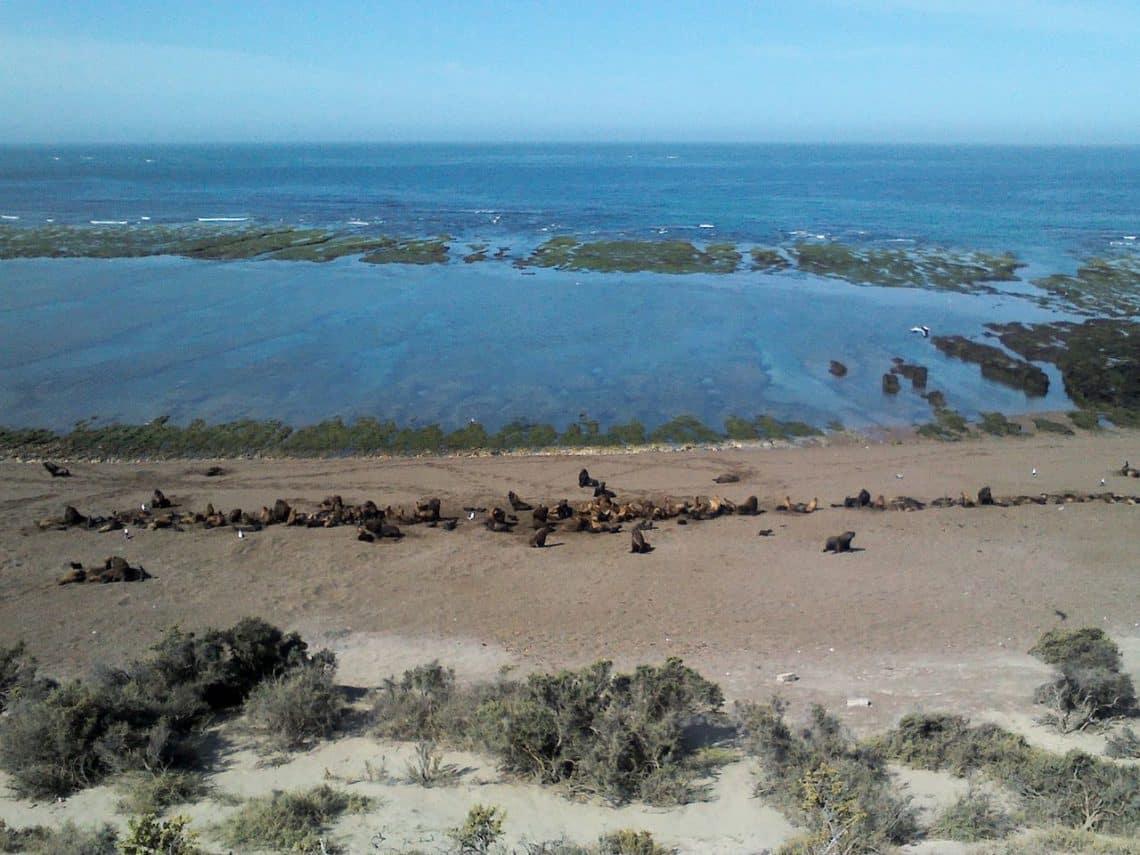 Lobos Marinos en Punta norte, Chubut