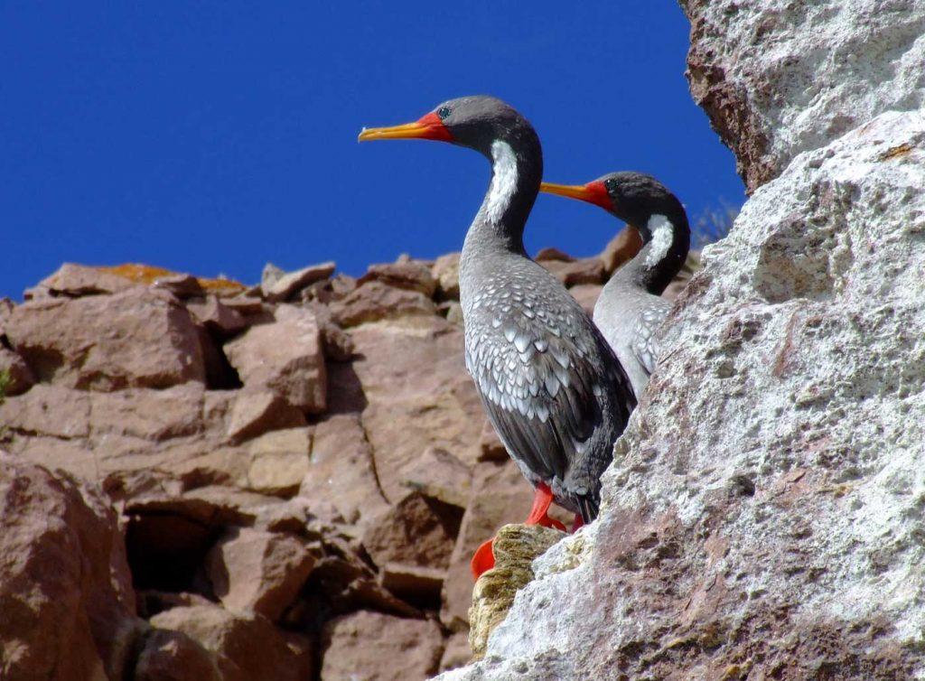 Observación de Aves en Puerto Deseado, Santa Cruz