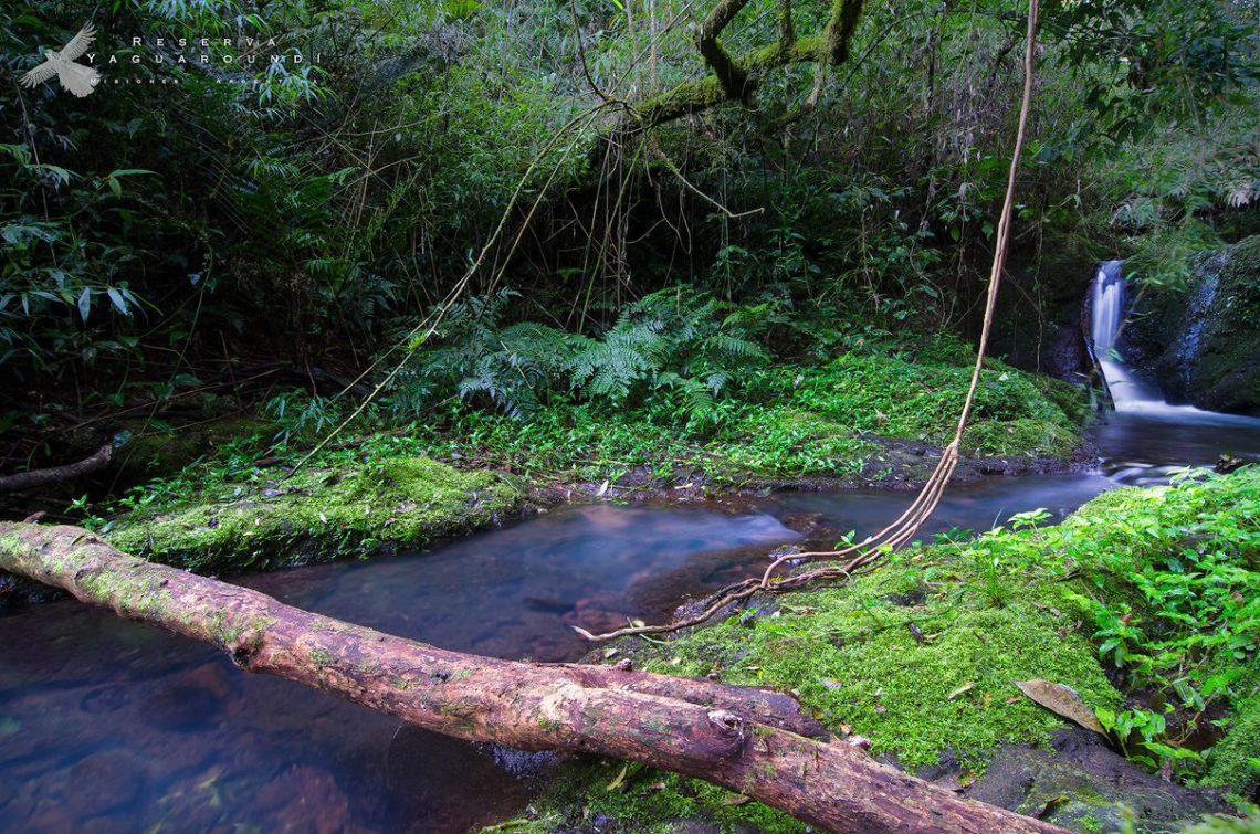 Reserva Yaguaroundí, Misiones