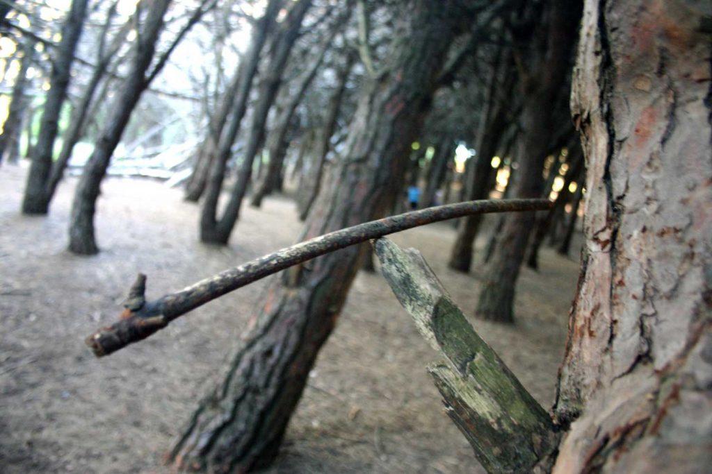 Bosque Energético de Miramar, Buenos Aires