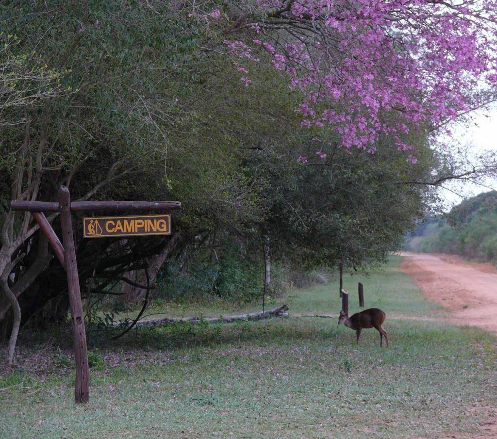 Parque Nacional Mburucuyá - Corrientes