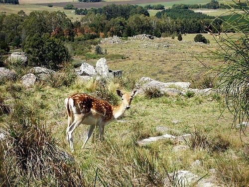 Sierra del Tigre, una reserva natural sorprendente en Tandil