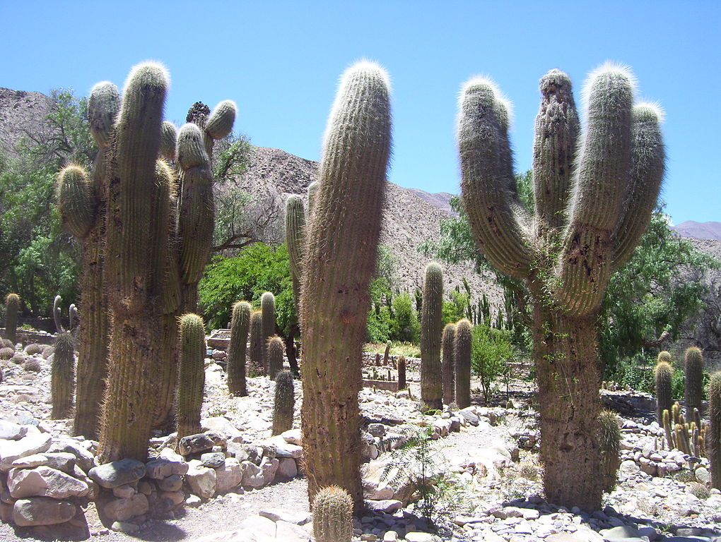 Jardín Botánico de Altura de Tilcara. Jujuy