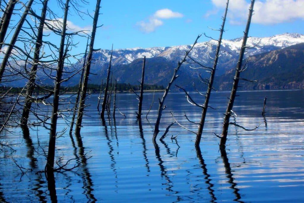 Bosque sumergido del Lago Traful, Neuquén