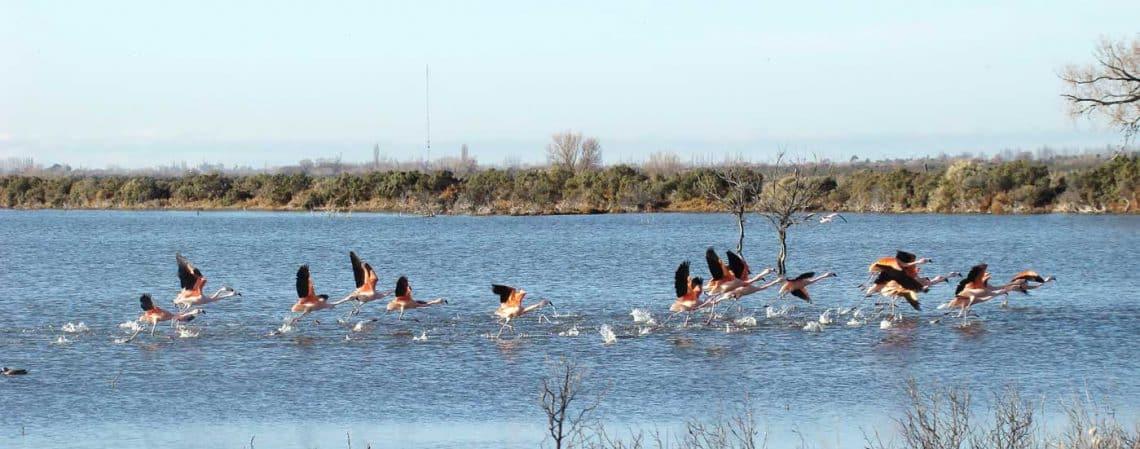 Laguna del Ornitólogo, Trelew, Chubut