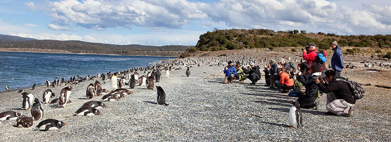 Excursión Pinguinera en Isla Martillo