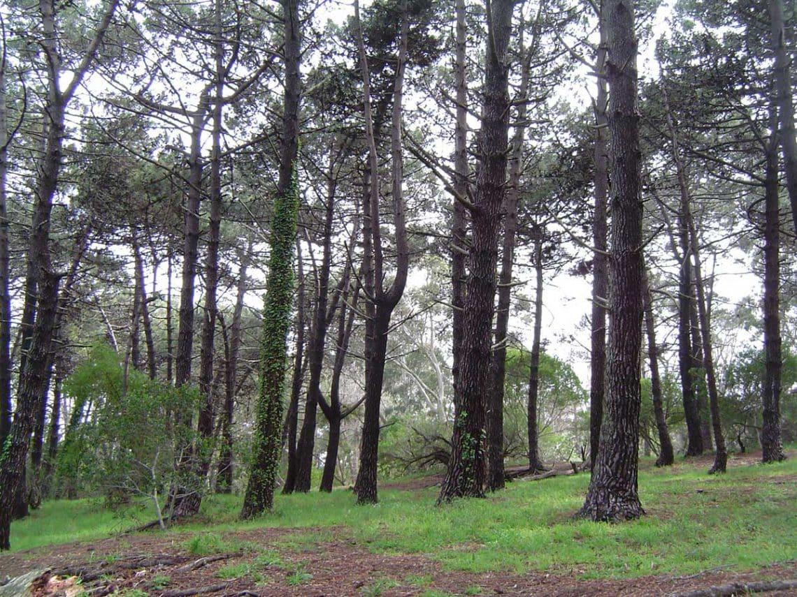reserva pinar norte , villa gesell
