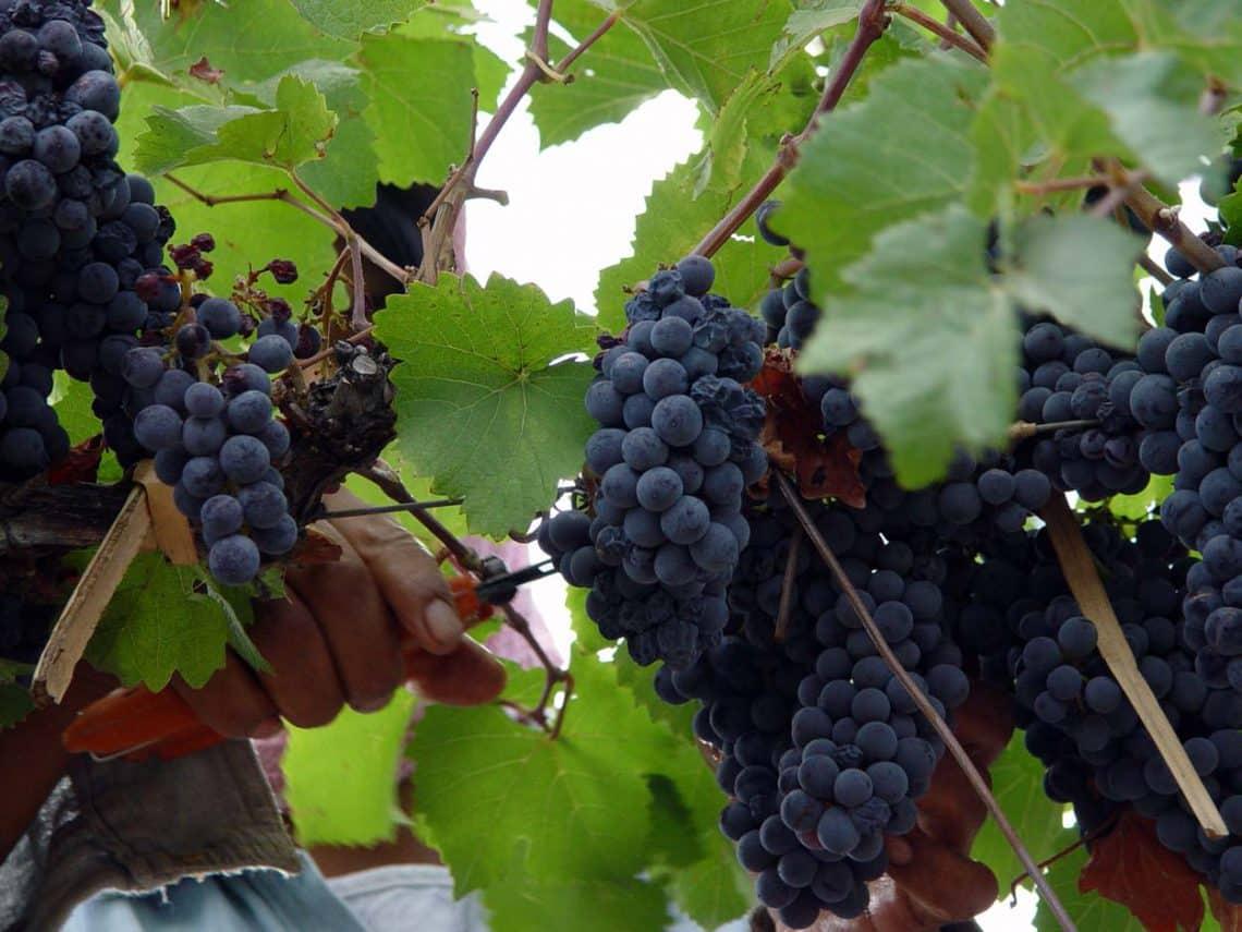 Ruta del Vino en Mendoza