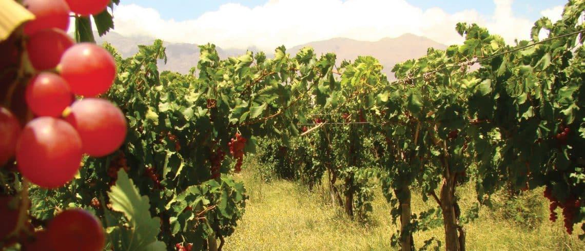 Ruta del Vino en Catamarca - foto: argentina.travel