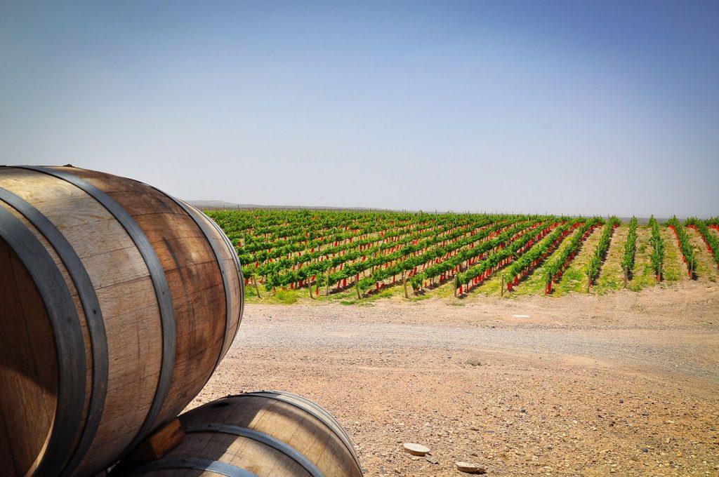 Ruta del Vino Neuquén, Bodega Patritti