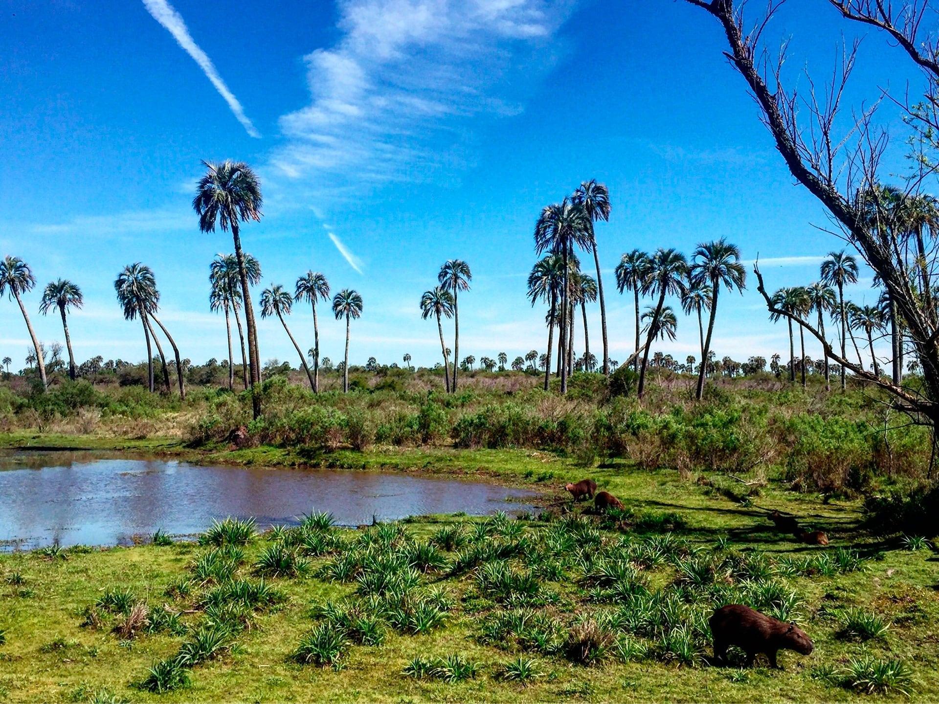 Parque Nacional El Palmar de Entre Ríos, un lugar único en el mundo