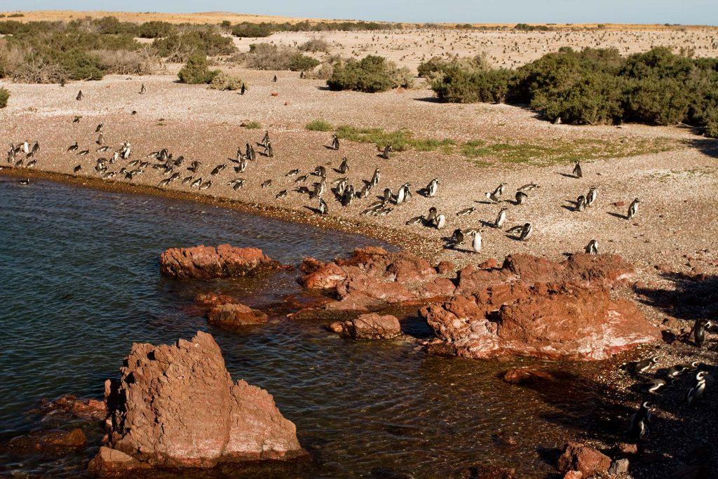 Área Natural Protegida Punta Tombo - Entretur