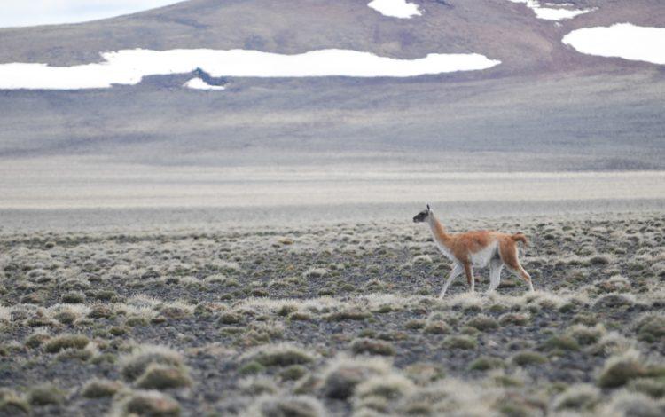 Parque Nacional Patagonia - parquesnacionales.gob.ar