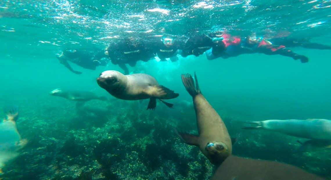 buceo con lobos marinos, Puerto Madryn