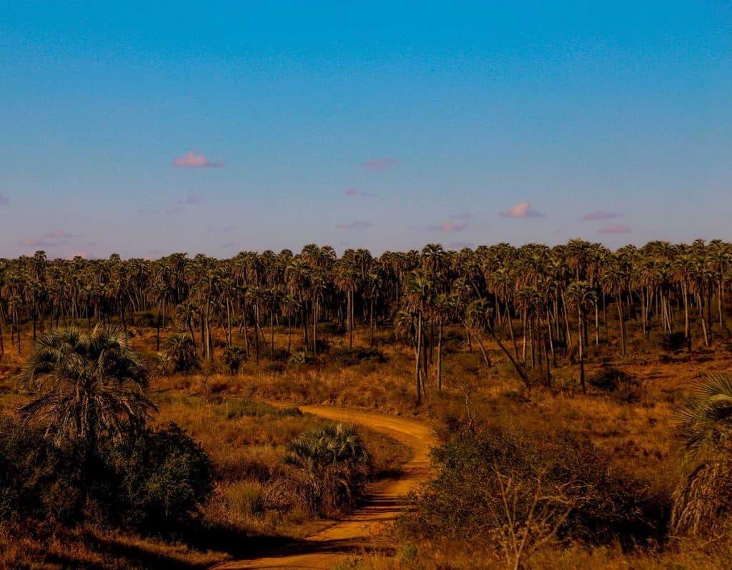 Parque Nacional El Palmar de Colón, Entre Ríos