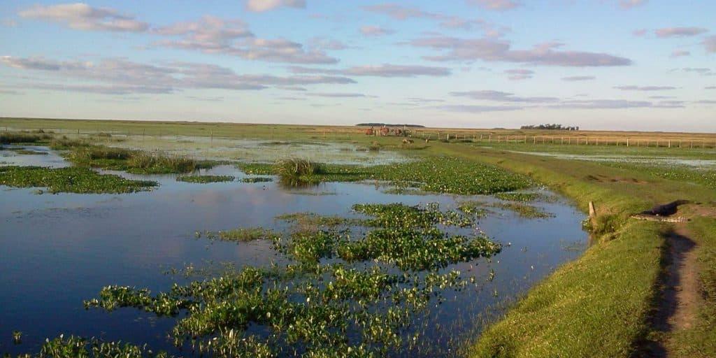 Esteros del Ibera, Parque Nacional Iberá - Corrientes - Argentina