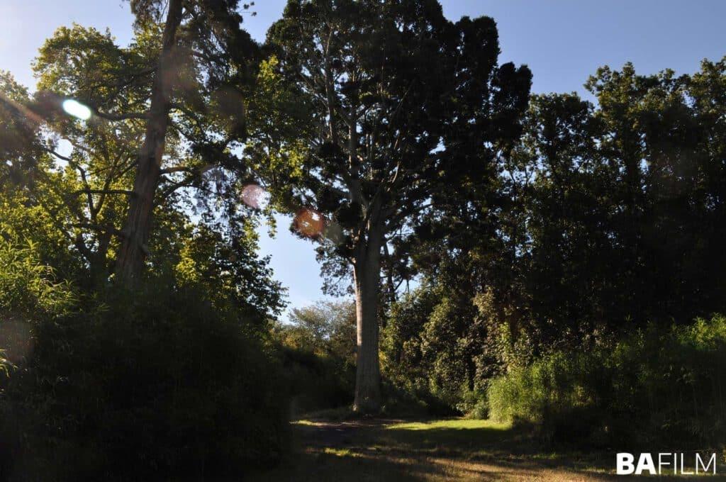Árbol de Cristal, Parque Pereyra Iraola, La Plata - Bafilm