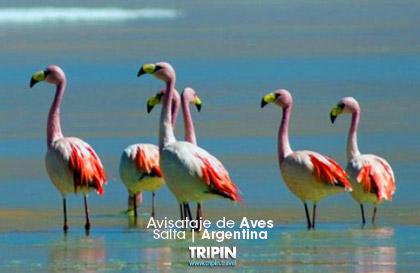 avistaje de aves en Salta, una excelente oportunidad