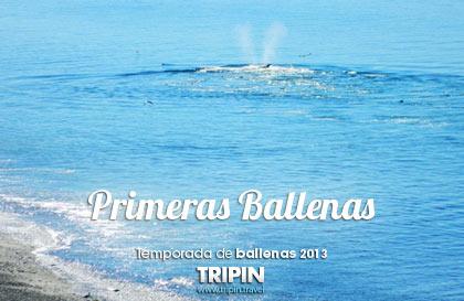 Comienzo de la temporada de Ballenas 2013