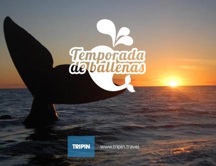 Comienza la temporada de ballenas 2016, una experiencia única en el mundo!
