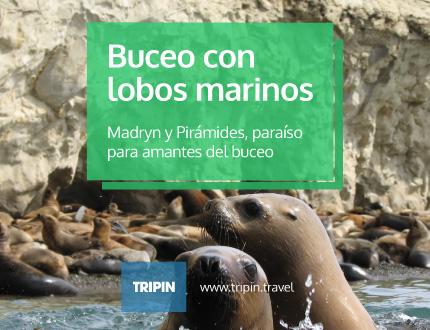 Buceo con lobos marinos en Madryn y Pirámides