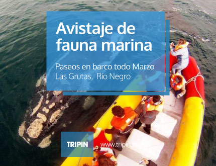 Avistaje de fauna marina en Las Grutas, Río Negro