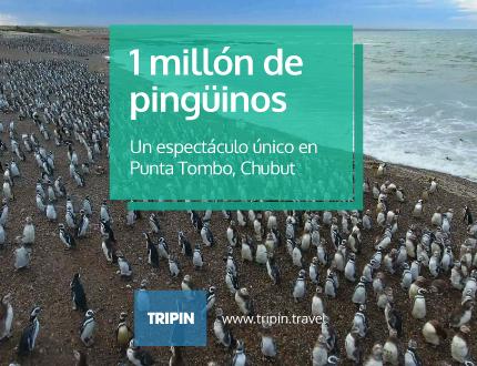 1 millón de pingüinos en Tombo
