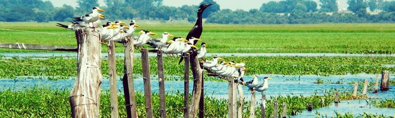 Esteros del Iberá, un destino de ensueño en el corazón de Corrientes
