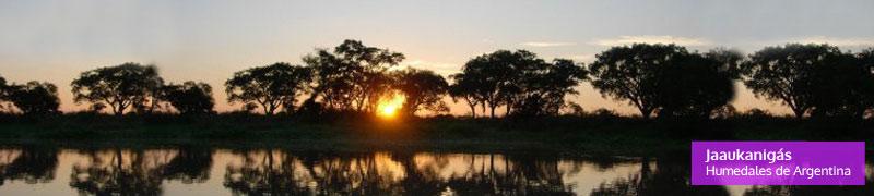 Jaaukanigas en el Rio Paraná, humedales de Argentina