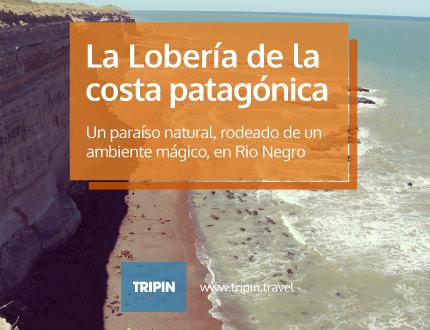 La Lobería de la Costa Patagónica! En Rio Negro!