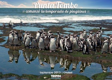 Punta Tombo y la temporada de pinguinos 2013