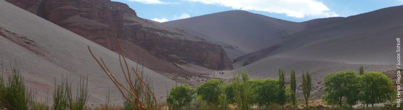 Las Quinuas, un oasis en pleno desierto en Catamarca