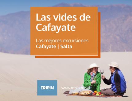 Las vides de Cafayate en Salta