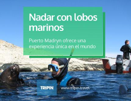 Nadar con lobos marinos en Puerto Madryn, una experiencia única en el mundo
