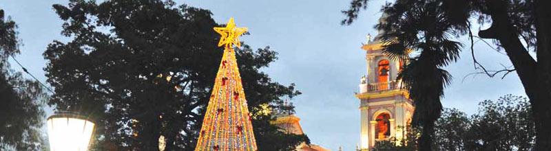 Frente a la catedral basilica de Salta un arbol de máss de 12 mts