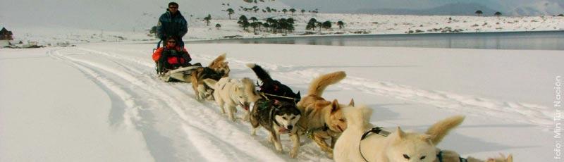 Los paseos en trineo en los centros de ski del Argentina