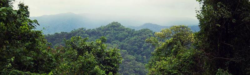 Parque Nacional Calilegua Jujuy